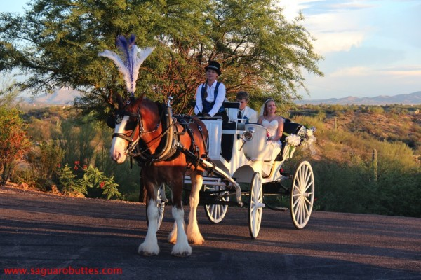Heather & Neil on Horse Buggy