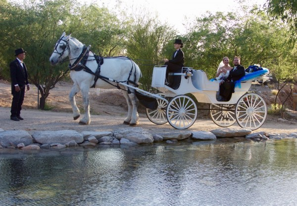 Horse & Carriage in Tucson